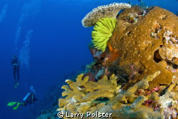 Crinoids and Corals of the Banda Sea. D300-Tokina 10-17mm by Larry Polster