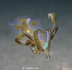 Night dive~ see the cute creature coming~ by Tommy Liu