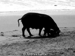 BAY OF PIGS... by Andres Larraz