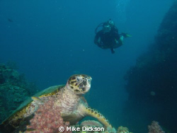 Three Sisters dive site at Damaniyat Islands. My long suf... by Mike Dickson