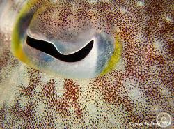 Cuttlefish Eye.  Slight (10-15%) crop.  Canon G10, 2xUCL1... by Stephen Holinski