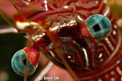 Eyes - Durban Hinge-beak Shrimp Canon 450D + 60mm Macro ... by Enje Im