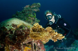 Diver checking wing of Emily Flying Boat-Truk Lagoon 2008 by Richard Goluch