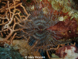 Tube Worm by Loay Rayyan