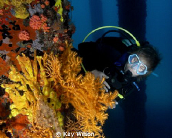 Diver under the pier by Kay Wilson