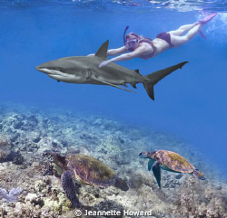 Shark Girl with Turtle escorts! by Jeannette Howard