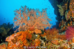 The corals and colors of the Banda Sea. D300-Tokina 10-17 by Larry Polster