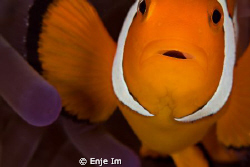 clownfish closeup - 100mm macro lens + 2x tc by Enje Im