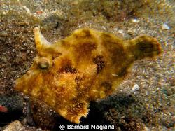 Finally I got one of this specie... by Bernard Maglana
