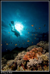 Scorpionfish and diver. by Dray Van Beeck
