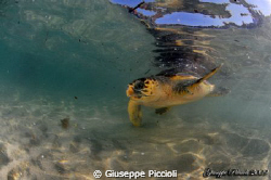 Watching under the surface by Giuseppe Piccioli