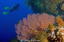 Many colorful sea fans in the Banda Sea. D300-Tokina 10-17 by Larry Polster