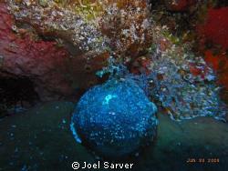 Blue Sea Pearl-Cozumel by Joel Sarver