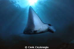 ( Manta - Sun ) . ray   :)) by Cenk Ceylanoglu