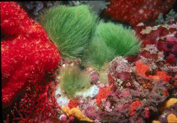 The Colors of Fiji.  Taken w/Nikonos V, 20mm lens, Ike Su... by Beverly J. Speed