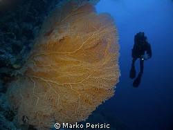 Giant Sea Fan and diver. by Marko Perisic