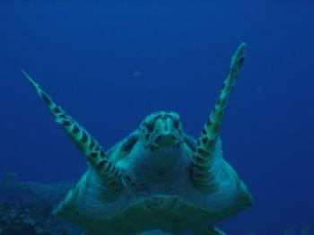 Drift diving encounter by Steven Parker