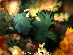 Dive site: Batok in Anilao Batangas