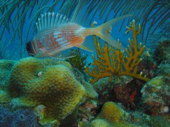Taken with Sony Cybershot T1 in Turneffe Atoll, Belize by Steven Parker
