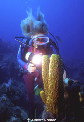 The girldiver is watching and lighting a big tube sponge.... by Alberto Romeo