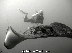 Marble Ray with Diver,