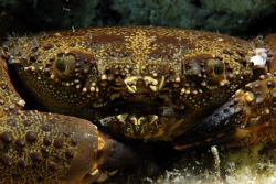 some macro shot of a crab. by Andy Kutsch