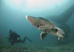Mr T with Sturgeon. Capernwray. D200, 10.5mm. by Derek Haslam