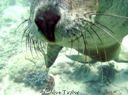 I took many photos of this playfull seal, we were heading... by Chloe Taylor