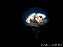"""Jelly belly""