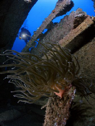 Nice anemone inside a wreck. by Juan Torres