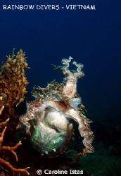 Cuttlefish in Nha Trang, Vietnam by Caroline Istas