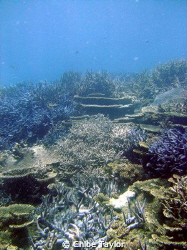 I love how the different corals all seem to fit together,... by Chloe Taylor