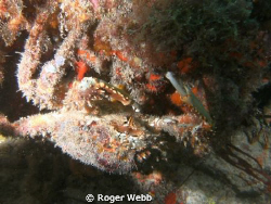 Under the ledge and was so focused on him that did not se... by Roger Webb