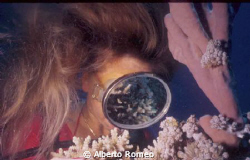 Reflexion of corals on the mask of girldiver that is watc... by Alberto Romeo