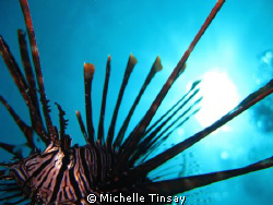 Common lion fish at arco point in bohol. shooting with my... by Michelle Tinsay
