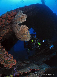 An underwater photographer sizing up the WIT Shoal in St.... by Juan Torres