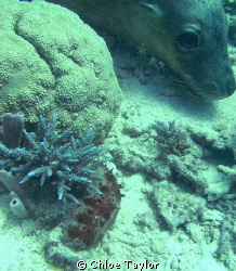 I was just taking a photo of the red sea slug with the bl... by Chloe Taylor