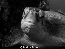 turtle...I think this portrait is better in B/W...;-) by Melita Bubek