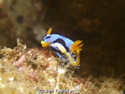 Taken in Duka Bay, Medina, Philippines, 60 ft, C7070 Olym... by Jun Quiblat