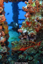 Pictures was in the WIT SHOAL WRECK in Saint Thomas by Ernesto Rodriguez