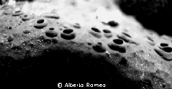 Is it the surface of the moon ?  NO ! It is a sponge........ by Alberto Romeo