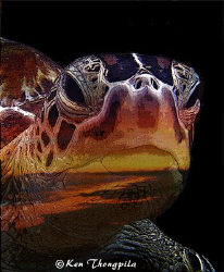 This is when a turtle from Malaysia meets the sunset in A... by Ken Thongpila