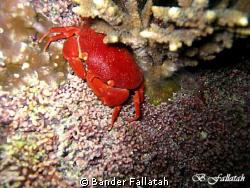 crab in Jna /night   canon 860  extarnal flash by Bander Fallatah