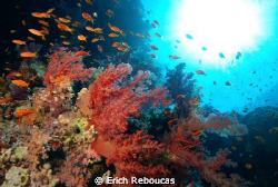 My favorite reason why it's called the RED SEA  : ) by Erich Reboucas