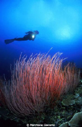 Beatiful garden with red whip coral
