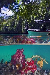 Snorkeling,in Raja Ampat by Tunc Yavuzdogan