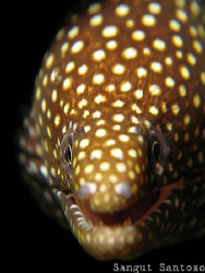 Smiley Moray by Sangut Santoso