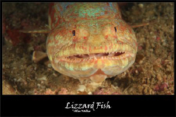 Lizzard Fish taken close up and he was not budging! by Allen Walker