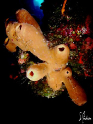 This image was taken during one of the many dives along t... by Steven Anderson