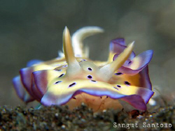 """Jewel over the sand"" by Sangut Santoso"